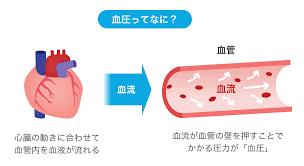 「血圧 仕組み イラスト」の画像検索結果