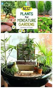 indoor fairy garden. Indoor Fairy Garden Ideas Best Plants For Miniature Gardens Container A