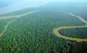 Bildresultat för regnskog