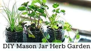 home depot herbs garden windowsill herb garden kit window growing herbs outdoors by kitchen indoor home depot herbs garden