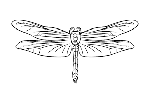Small Picture FREE Dragonfly Coloring Page 20
