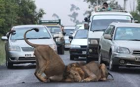 Photo of Nairobi National park 2