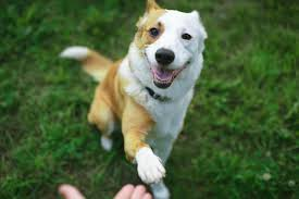 Cute Dog Tricks (Page 1) - Line.17QQ.com
