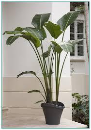 common large house plants
