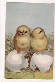 Easter - 2 chicks on broken shells, with silver embellishments - C1714 –  KATHYS POSTCARD EMPORIUM