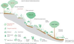 ecological map of the cliffs on drew mountain  northern forest atlas