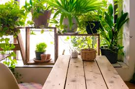 The Ultimate Guide to Indoor Plants - Greener on the Inside
