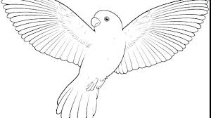 Free Bird Coloring Pages Free Angry Birds Colouring Sheets Free Bird