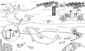 Maak Van Een Pompoen Een Toverlantaarn Natuurmonumenten