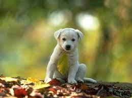 Puppy dog photos, Animal wallpaper ...