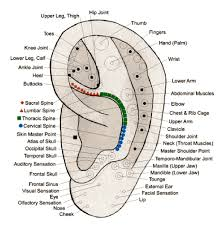 Acupuncture Auricular Points Chart 21 Precise Auricular Map