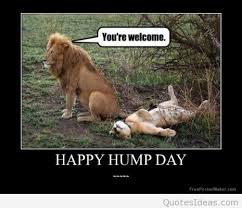 Funny Hump Day Quotes Magnificent Funny Happy Hump Day Sayings Pictures And Cartoons