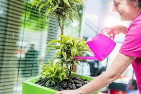 office plant displays. Modren Office Office Plant Displays Make Big Impact To Plant Displays P