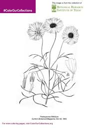 Botanical Research Institute Of Texas Coloring Book Color Our