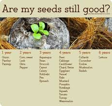 How To Store Seeds For Years Sow True Seed Storage Tips