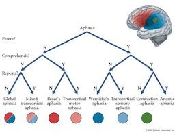 Aphasia Flow Chart Aphasia Speech Language Therapy