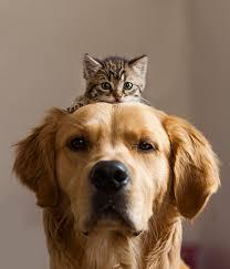 Rezultat iskanja slik za pes in mačka