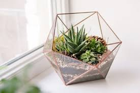 great office plants. Plant Terrarium 15 Great Plants For The In Your Home Or Office Mnn S