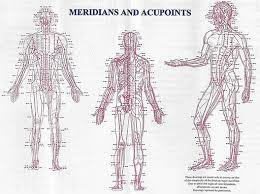 Chinese Meridian Chart Pdf Meridians In Traditional Chinese Medicine Amc Miami Florida
