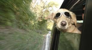 pet business insurance ireland is a pet taxi insurance specialist