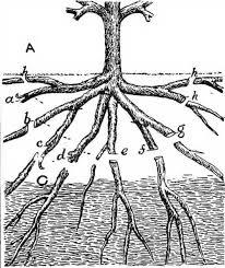 How To Prune Apple Trees In Summer GardenersworldcomPrune Fruit Tree