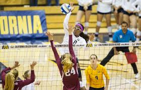 photo essays the daily californian killin it cal volleyball impressed in the nonconference portion of its season
