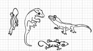 Reptile Growth Chart Crested Gecko Outline