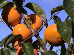 Fruit Trees Citrus Avocado Nuts Berries And Flowering PlantsSouthern California Fruit Trees