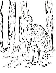 wild turkey coloring pages. Beautiful Pages Wild Turkey Coloring Page Throughout Pages K
