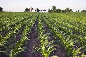 land loans washington state. Wonderful State Florida Citrus Grove Transitions To Row Crop Land And Loans Washington State