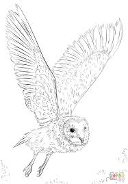 Small Picture Barn Owl in Flight coloring page Free Printable Coloring Pages