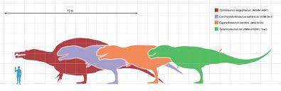 carcharodontosaurus size carcharodontosaurus and giganotosaurus facts dinosaur home