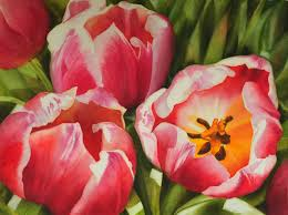 pink red tulips in watercolor large realistic flower painting by doris joa