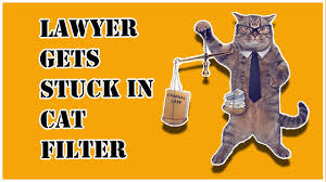I'm not a cat, the attorney said. Z47grbmjcaisym