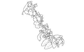 花と葉縦長素材 線画 フリー素材サイトたりぽす