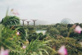 singapore supertrees garden city