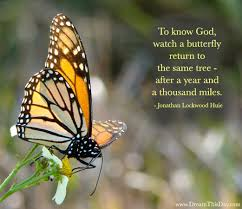 Butterfly Quotes Interesting Butterfly Quotes And Sayings Quotes About Butterfly