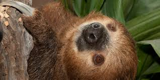 Why are <b>Sloths</b> So Slow? And Other <b>Sloth</b> Facts | Smithsonian's ...