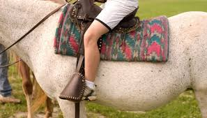 riding lesson image by allen stoner from fotolia com
