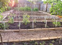 how to keep rats out of vegetable garden best of fall do rats eat ve ables