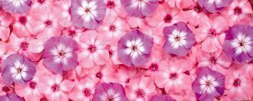free flower computer screen wallpaper