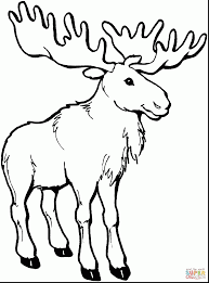 Small Picture Moose Animal Coloring Pages Gianfreda Net