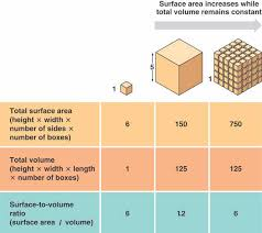 What Is Volume In Science Surface Area To Volume Ratio