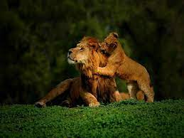 Cute Lion Wallpapers - Wallpaper Cave