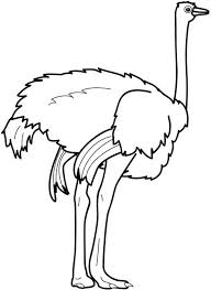 Small Picture Ostrich Strong Feet Coloring Page Color Luna
