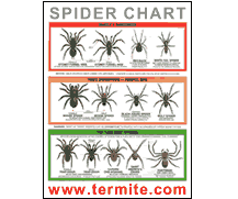 Free Spider Identification Chart Freebie Spider Identification Chart Us Paperblog