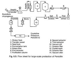 Penicillin Biosynthesis Structure Fermentation Process