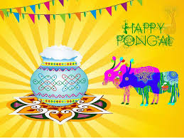 pongal festival pictures images hd photos happy   pongal festival images for fb whatsapp