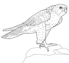 Disegno Di Falco Pellegrino Si Riposa Da Colorare Disegni Da