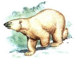 Реферат на тему Животные и растения Красной книги страница  Белый медведь